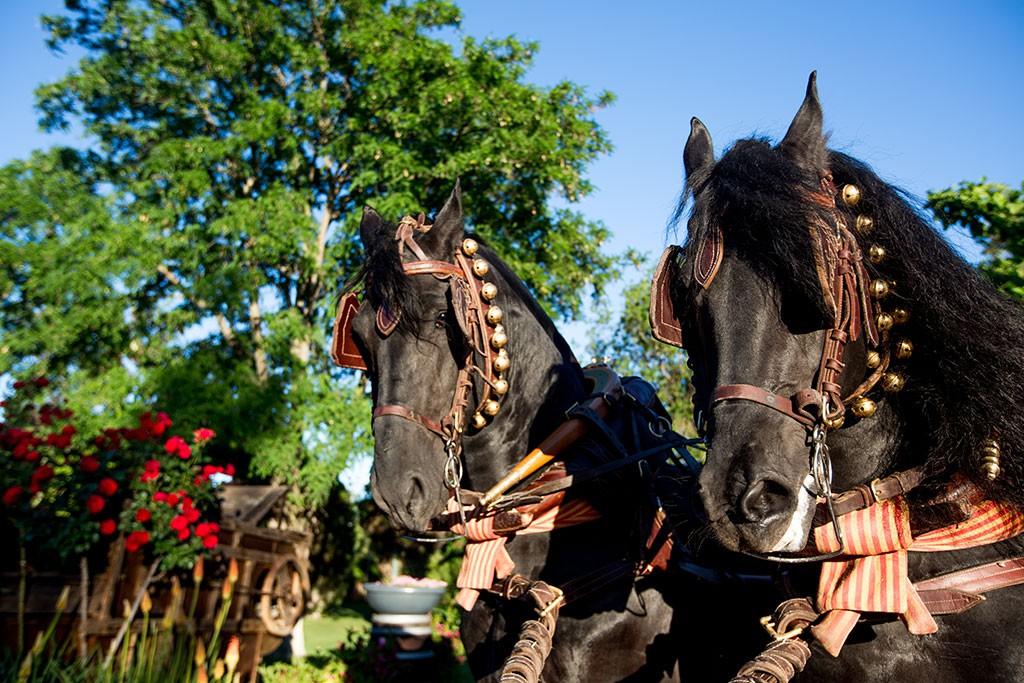 llegada de la novia a caballo
