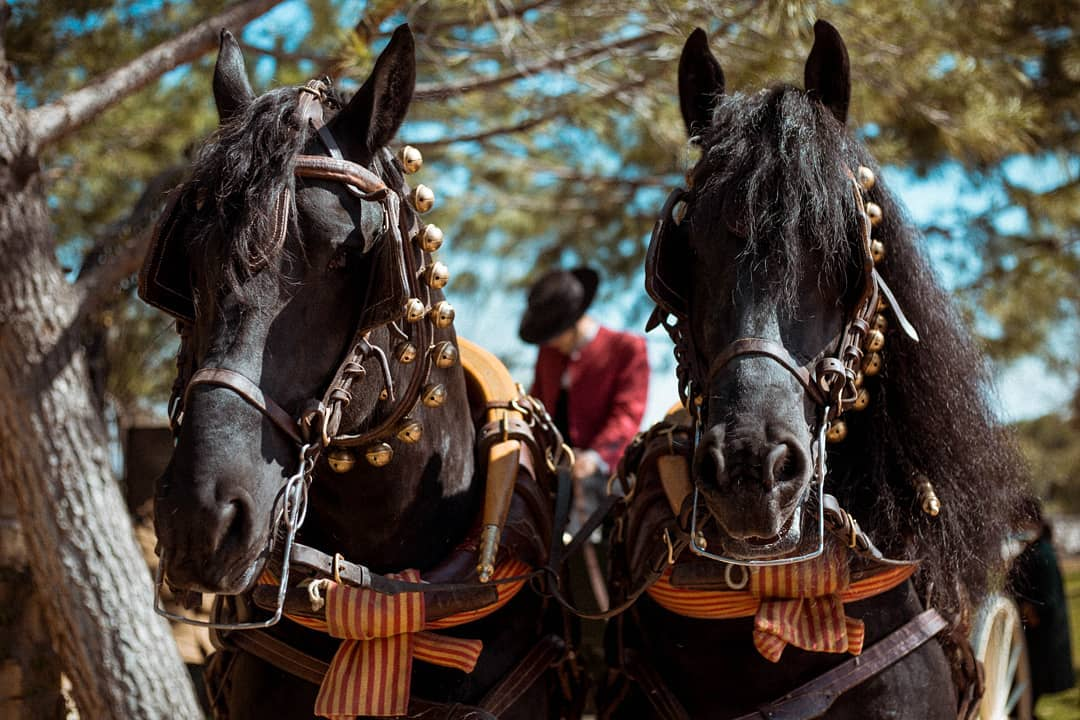 coche de caballos para bodas en Madrid
